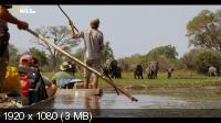 Вдоль по Окаванго / Into the Okavango (2018) HDTV 1080i