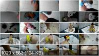 Solo Scat: (WCwife) - Fecal bath Part 1 [FullHD 1080p] - Masturbation, Amateur