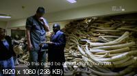 Спасение слонов с Яо Мином / Saving Africa's Giants with Yao Ming (2014) HDTV 1080i